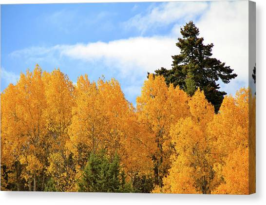 Autumn In The Owyhee Mountains Canvas Print