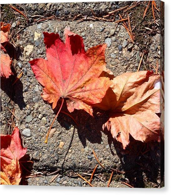 Orange Canvas Print - Autumn Is Here by Blenda Studio