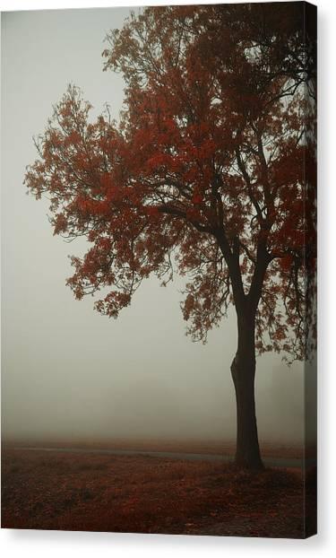 Fallen Tree Canvas Print - Autumn by Art of Invi
