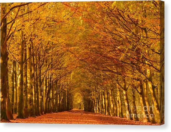 Autumn Lane In An Orange Forest Canvas Print