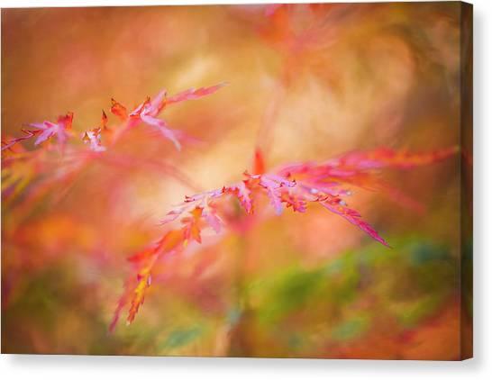 Autumn Leaf Abstract Canvas Print