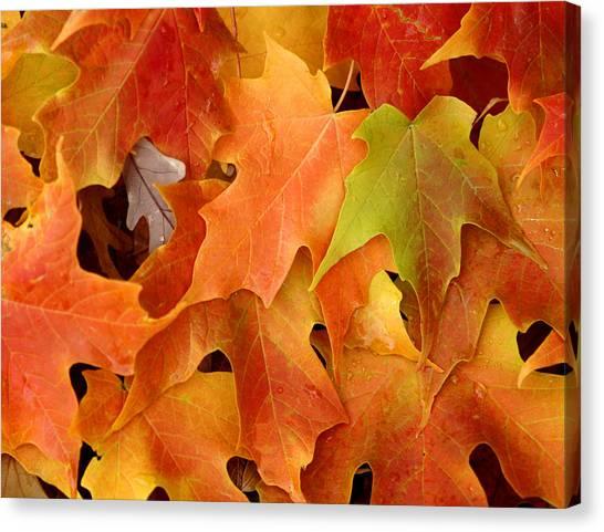 Autumn Leaves - Foliage Canvas Print by Dmitriy Margolin