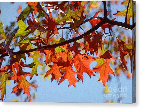 Autumn Leaves 16 Canvas Print