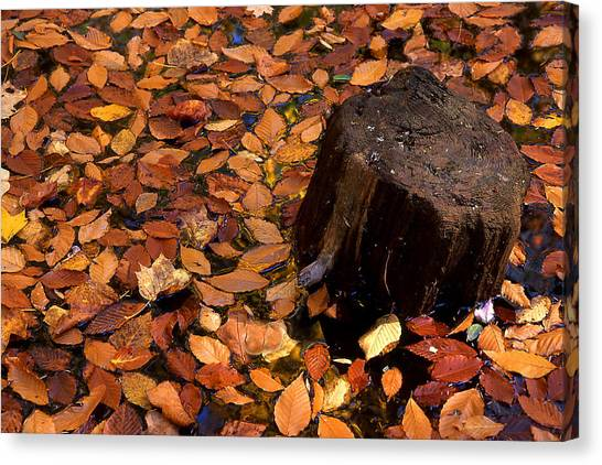 Autumn Leaves And Tree Stump Canvas Print by Barry Shaffer
