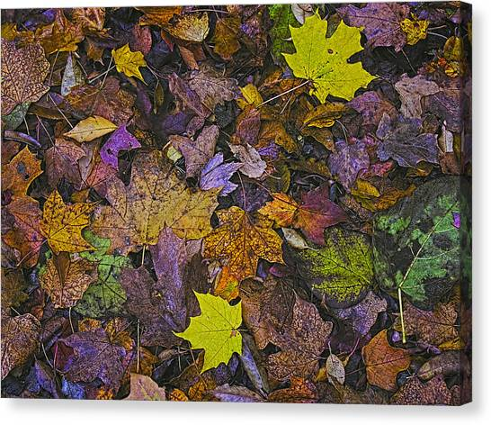 Autumn Leaves At Side Of Road Canvas Print