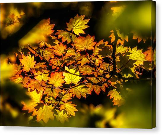 Canvas Print featuring the photograph Autumn Leaves by Claudia Abbott