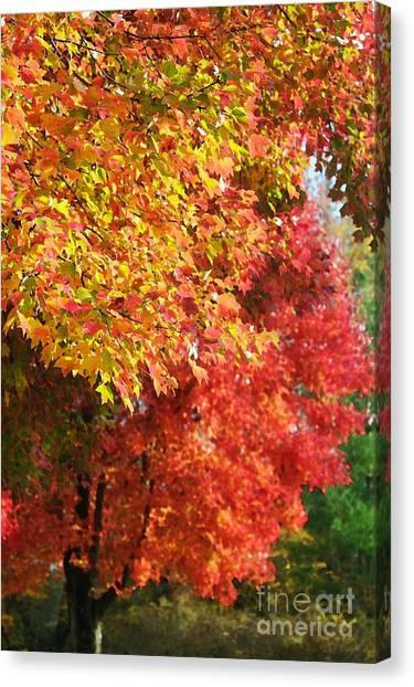 Autumn Leaves Canvas Print by Hideaki Sakurai