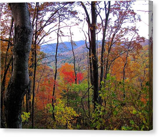 Autumn Leaves On Blue Ridge Parkway Canvas Print