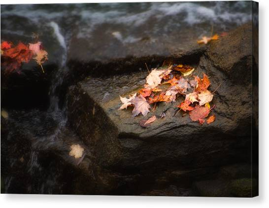 Maple Season Canvas Print - Autumn Leaves by Tom Mc Nemar