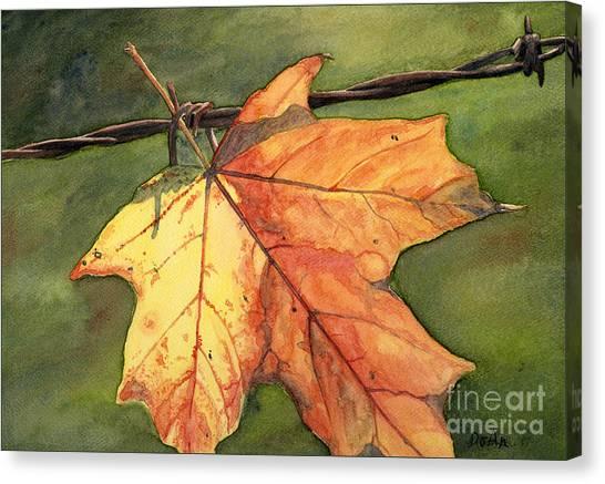 Maple Season Canvas Print - Autumn Maple Leaf by Antony Galbraith
