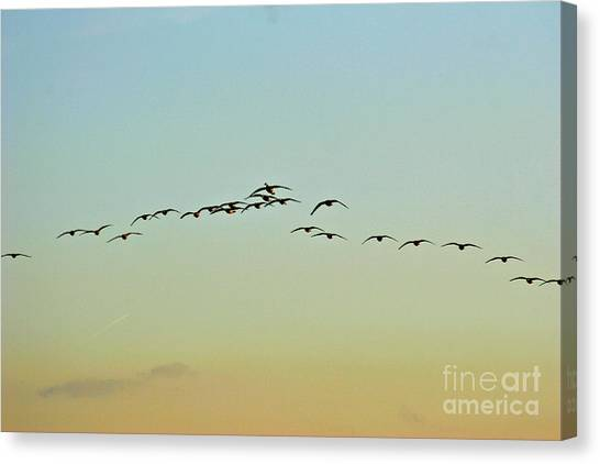 Autumn Migration Canvas Print