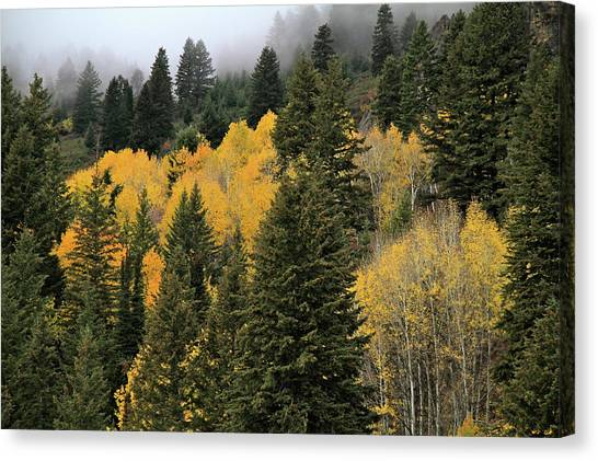 Autumn Mist, Owyhee Mountains Canvas Print