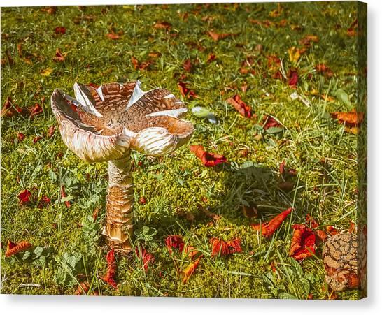 Autumn Mushroom Canvas Print