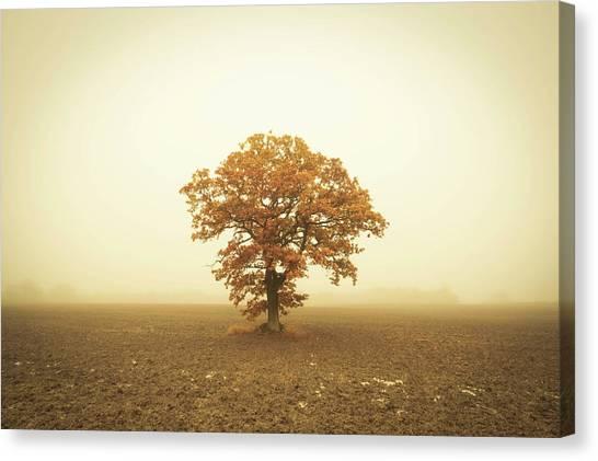 Canvas Print - Autumn Oak by Richard Nixon