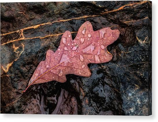 Fallen Tree Canvas Print - Autumn Oakleaf On Rock by Tom Mc Nemar