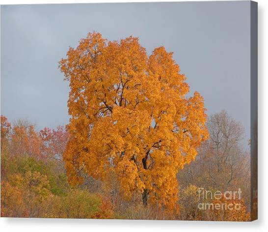Autumn Over Prettyboy Canvas Print
