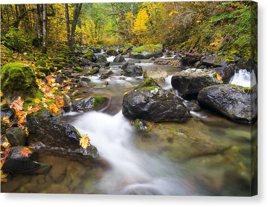 Maple Season Canvas Print - Autumn Passing by Mike  Dawson