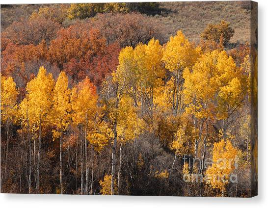 Autumn Patchwork Canvas Print by Dennis Hammer