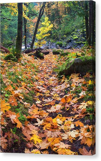 Forest Paths Canvas Print - Autumn Path by Mike  Dawson