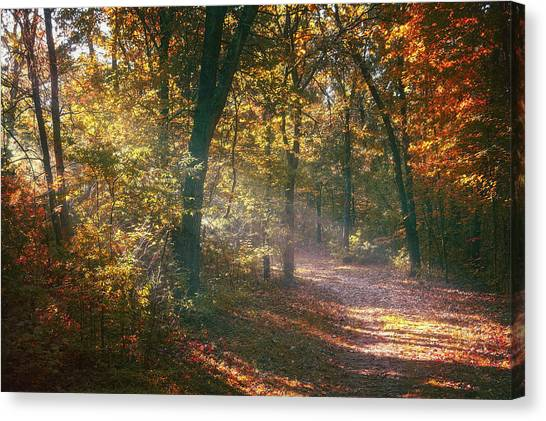 Forest Walk Canvas Print - Autumn Path by Scott Norris