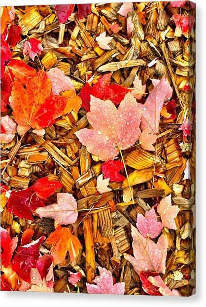 Autumn Potpourri Canvas Print