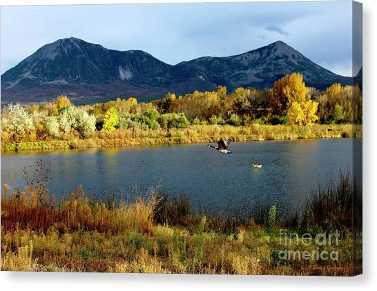 Autumn Rest Stop For Canadian Geese Canvas Print