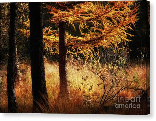 Canvas Print featuring the photograph Autumn Scene In A Dark Forest by Nick Biemans