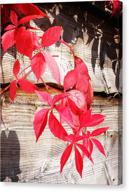 Autumn Shadows Canvas Print by Lucia Del