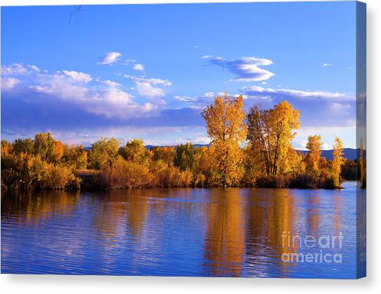 Autumn Shimmering Canvas Print by Barbara Schultheis