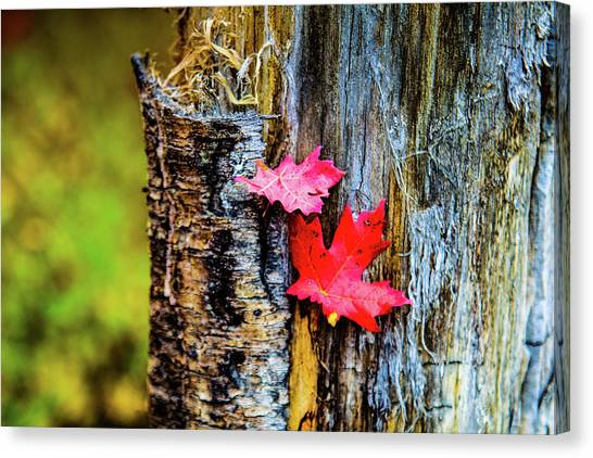 Autumn Silence Canvas Print