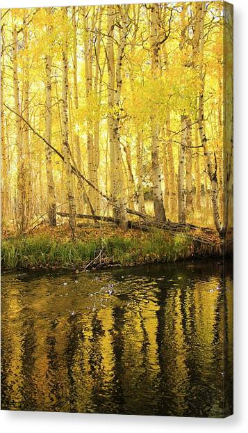 Autumn Soft Light In Stream Canvas Print