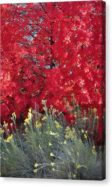 Autumn Splendor In Zion National Park Canvas Print