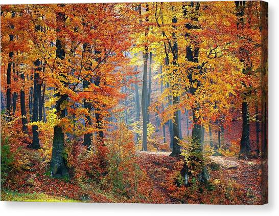 Autumn Splendour Canvas Print