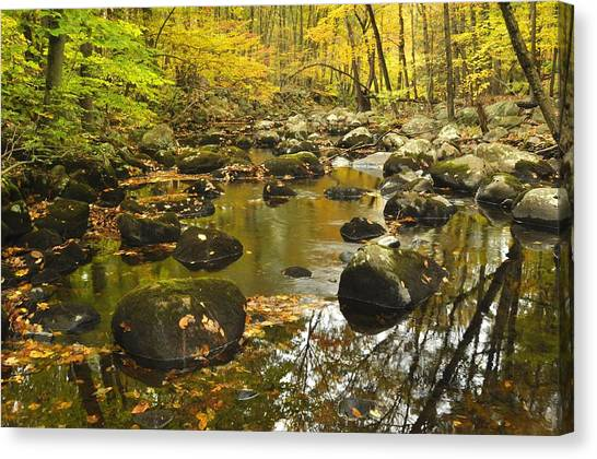 Autumn Stream Reflections Canvas Print by Stephen  Vecchiotti