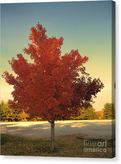 Maple Leaf Art Canvas Print - Autumn Tree  - Luther Fine Art by Luther Fine Art