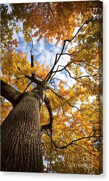 Causes Canvas Print - Autumn Tree by Nailia Schwarz