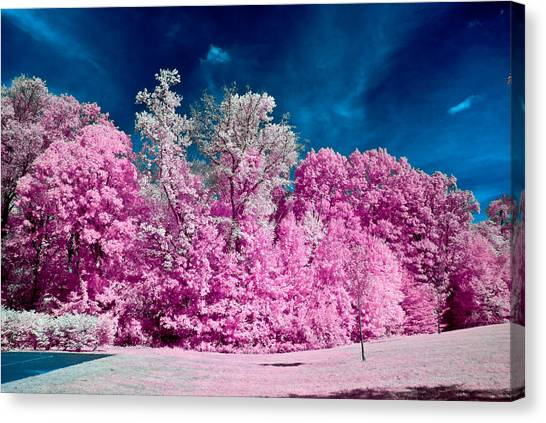 Autumn Trees In Infrared Canvas Print