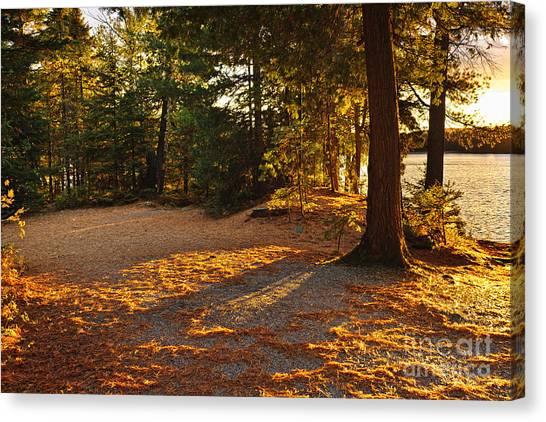 Algonquin Park Canvas Print - Autumn Trees Near Lake by Elena Elisseeva