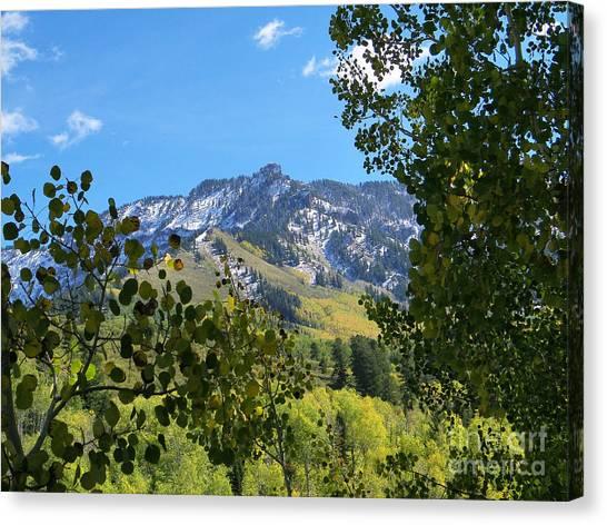 Autumn View Through Aspen Leaves Canvas Print