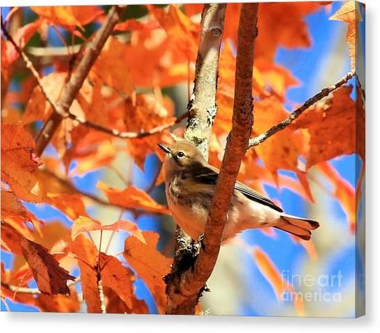 Autumn Warbler Canvas Print