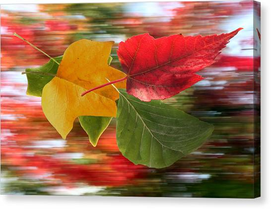 Autumn Wind Canvas Print by Barbara  White