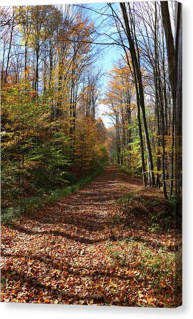 Autumn Woods Road Canvas Print