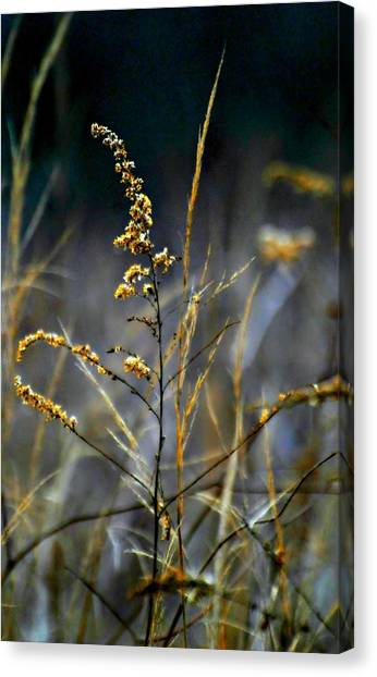The Nature Center Canvas Print - Autumns End by Diana Angstadt