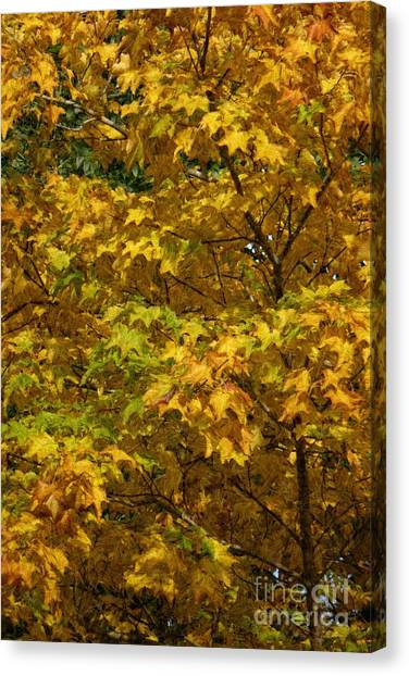 Autumnal Leaves And Trees 2 Canvas Print