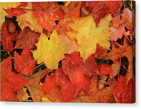 Autumns Gifts Canvas Print