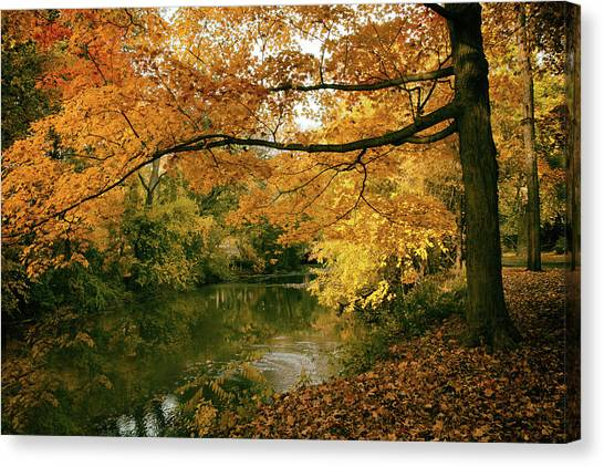 Canvas Print featuring the photograph Autumn's Golden Tones by Jessica Jenney