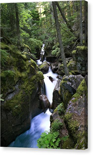 Avalanche Gorge Glacier National Park Canvas Print