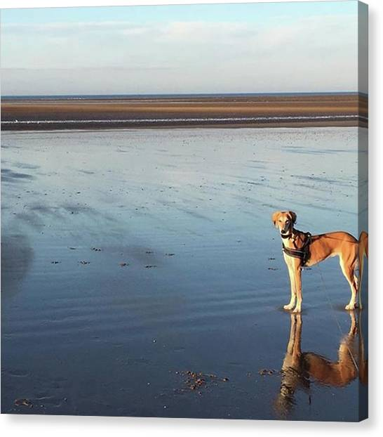 Canvas Print - Ava's Last Walk On Brancaster Beach by John Edwards