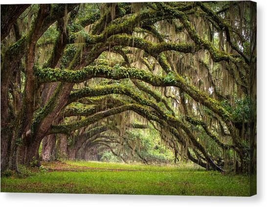 Horizontal Canvas Print - Avenue Of Oaks - Charleston Sc Plantation Live Oak Trees Forest Landscape by Dave Allen