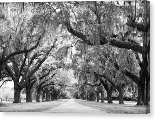 Forest Paths Canvas Print - Avenue Of Oaks Charleston South Carolina by Stephanie McDowell